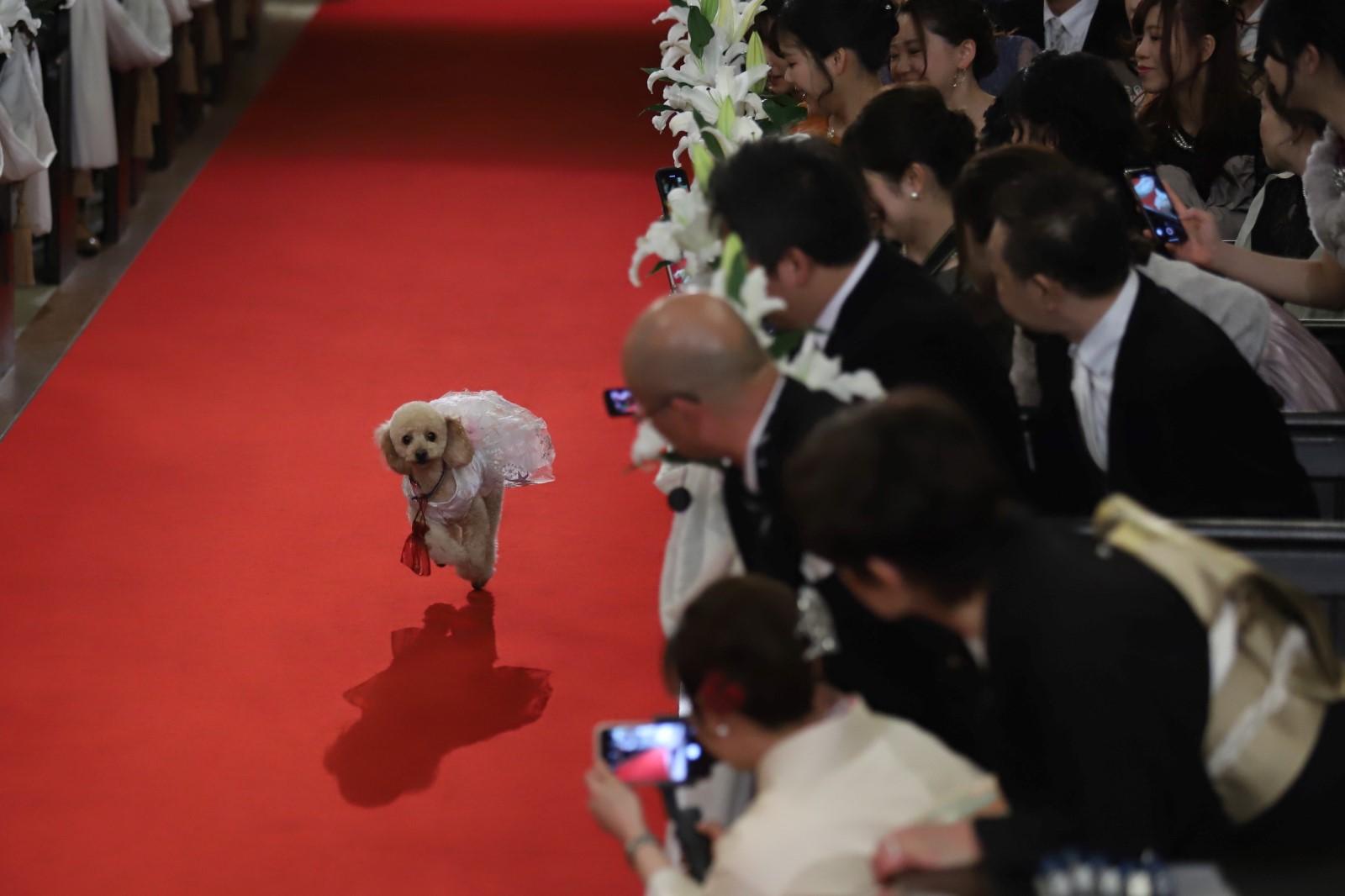 【公式】名古屋市八事の結婚式場 マリエール山手